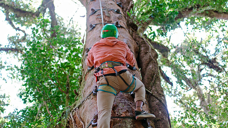 Monteverde Cloud Forest Tree Climbing Experience