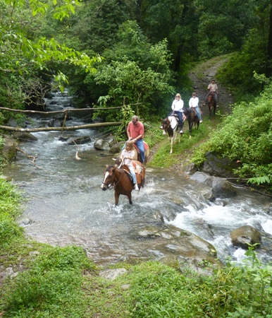 horse riding in a forest