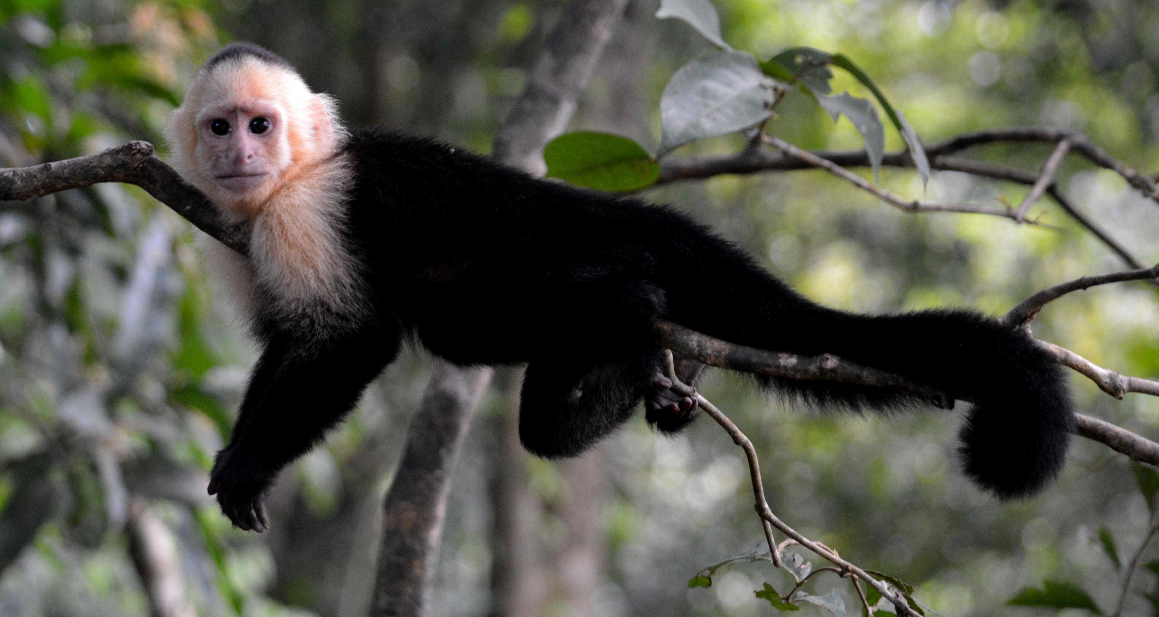 Monkey in a rainforest