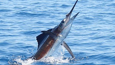 Costa Rica Fishing Report December 2020