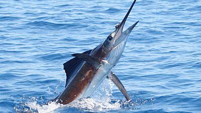 Informe de Pesca de Costa Rica Diciembre 2020