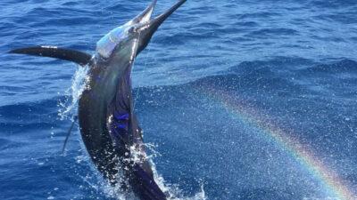 Costa Rica Fishing Report September 2021