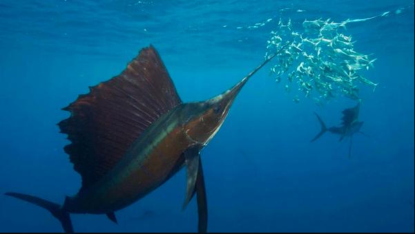 Premios de Torneo y Sabrosos Pescados