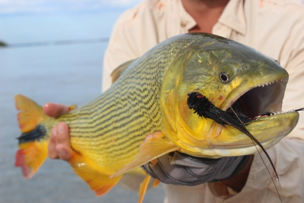 Marlin and Dorado Surge as Green Season Goes