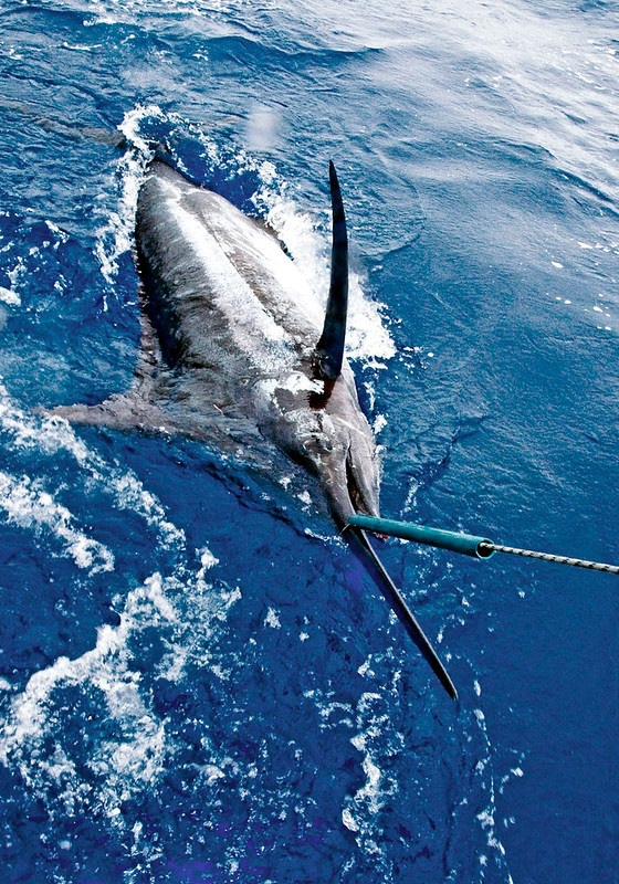 Blue Marling Hooked on Fishing Trip