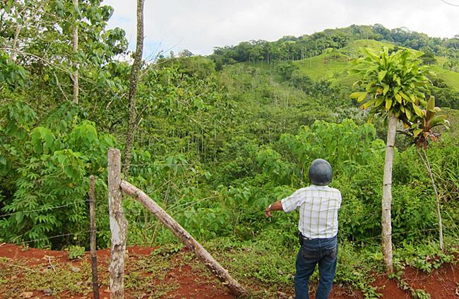 Rainforest Tours Costa Rica