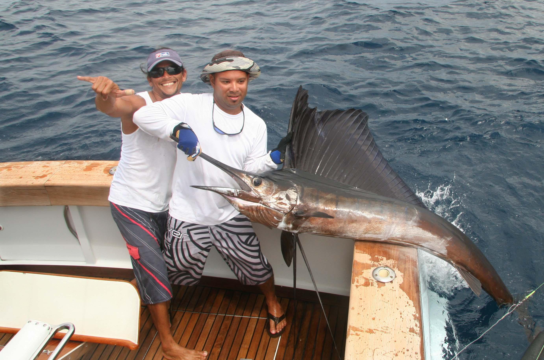 Record Breaking Sailfish Numbers