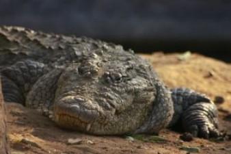 The Crocodile Mangrove Tour of Costa Rica