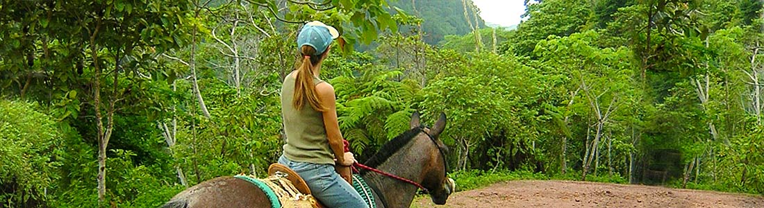 A Waterfall Worth Chasing- Horseback Waterfall Tours