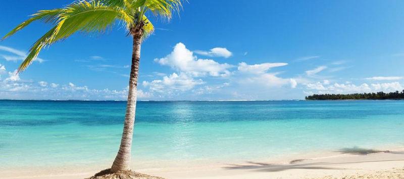 Costa Rica Ocean Palm Tree
