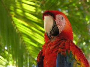 A Park Paradise: Manuel Antonio National Park