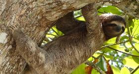 Encuentros de vida silvestre en el Parque Nacional Manuel Antonio