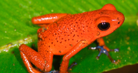 7 Exotic Animals You May Only Encounter in Costa Rica