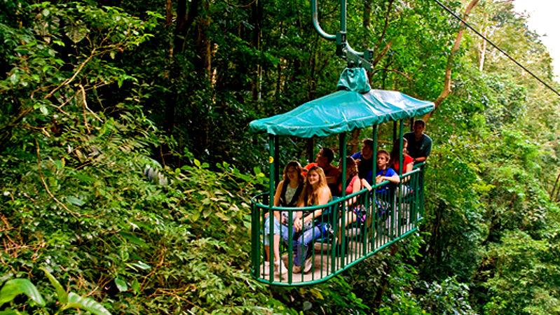 Tram rainforest tour