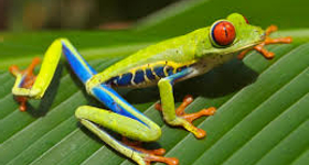 6 Reasons to Visit Costa Rica in the Green Season