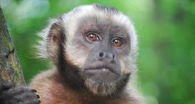 5 Ways to Meet Monkeys in Costa Rica