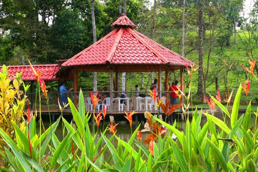 Atv rainforest jaco beach