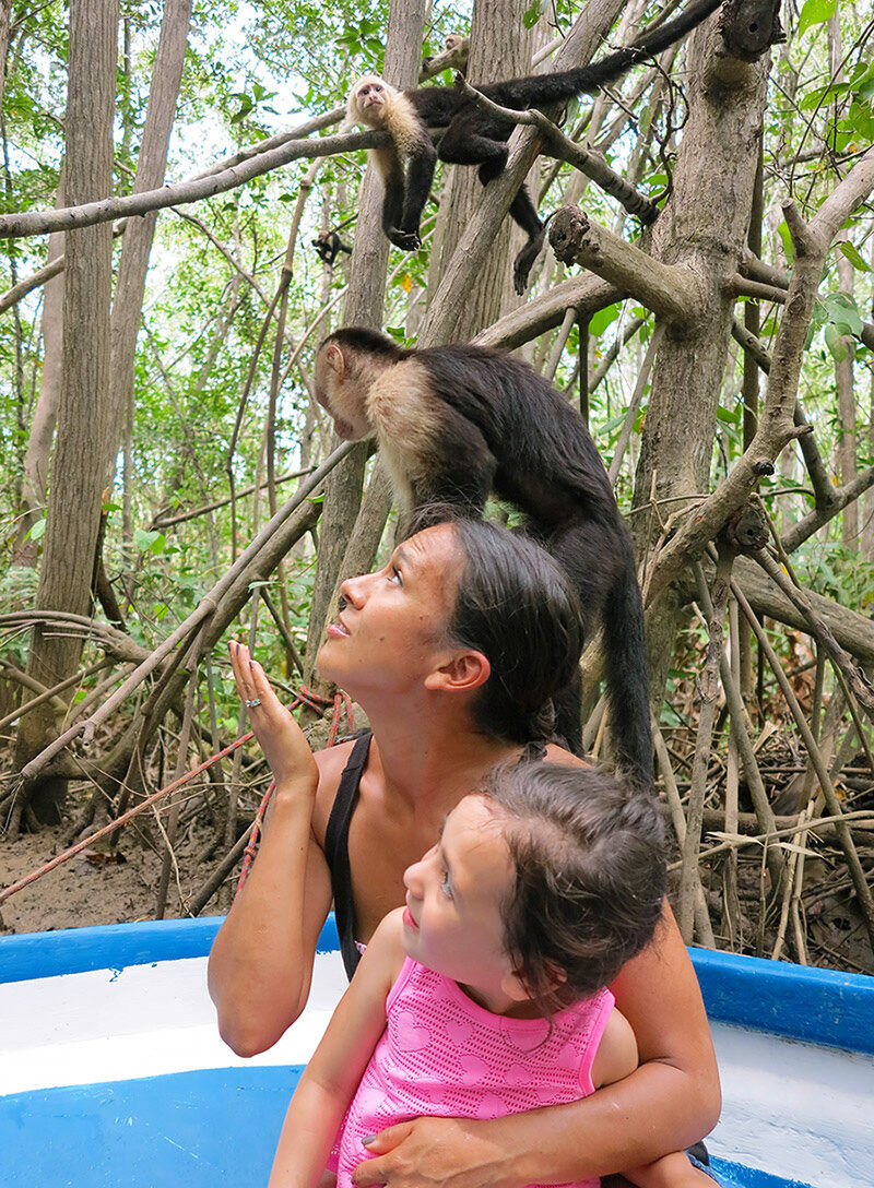 tour with monkeys in costa rica