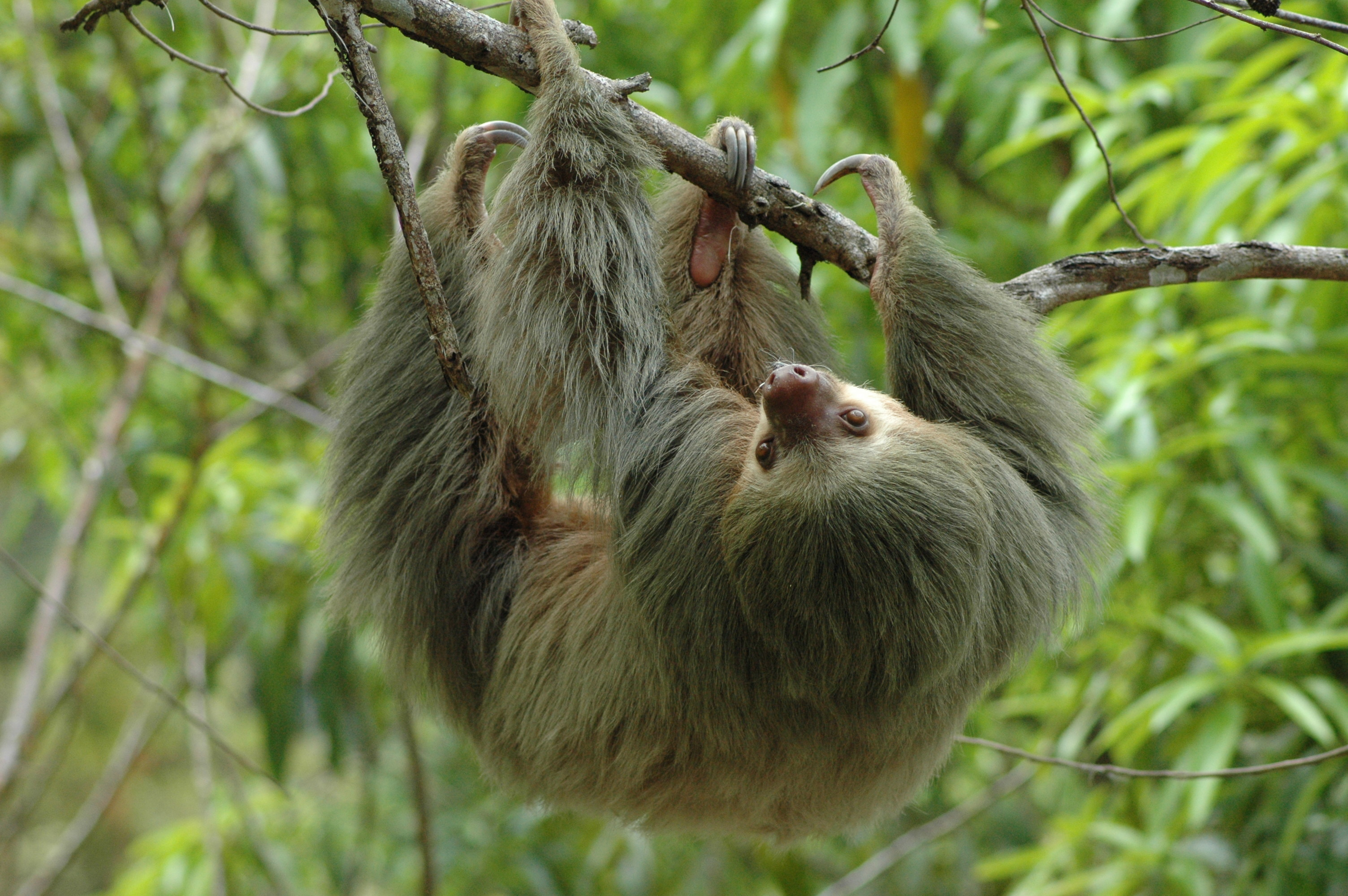 Sloth at Manuel Antonio National Park