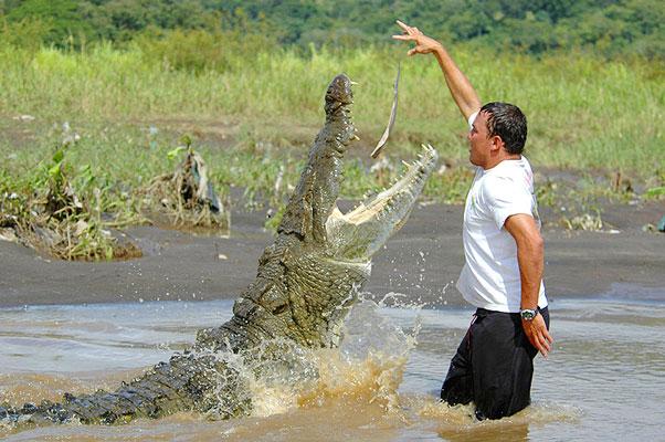 Man Feeding a Crocodile