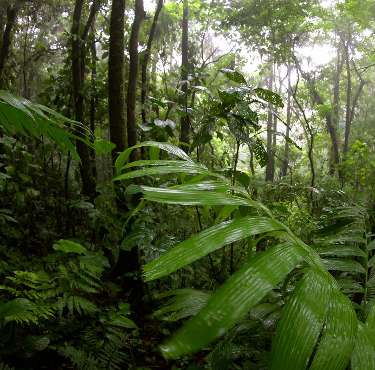 Green Rainforest in Costa Rica