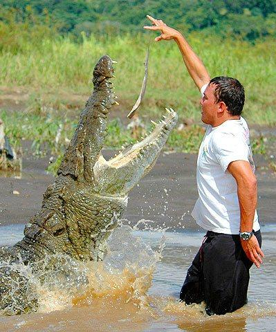 man with a crocodile on a tour in Costa Rica